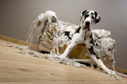 Verhaltensauffälligkeiten bei Tieren