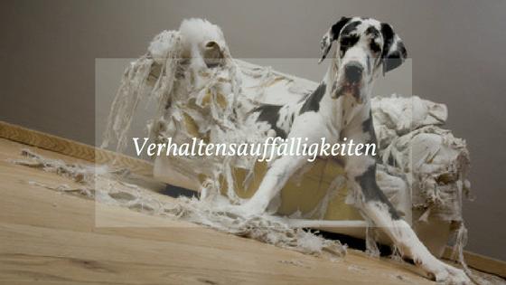 Problem Hund